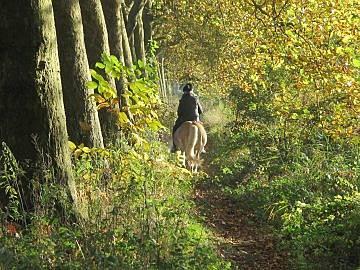 paardrijden bossen
