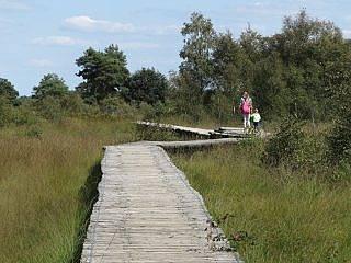 pad in Grote Peel
