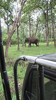 safari in Nagarhole