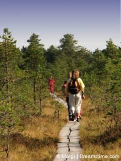 Estonia Viru Bog Trail